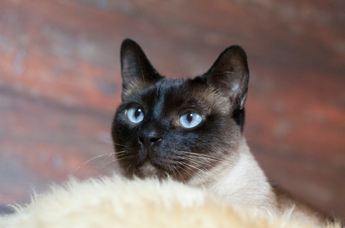 Katze115.jpg