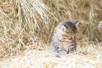 Katze109.jpg