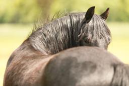 Pony169.jpg