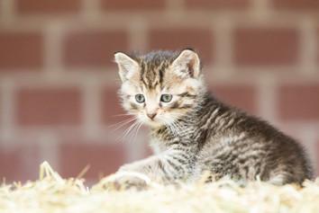 Katze106.jpg