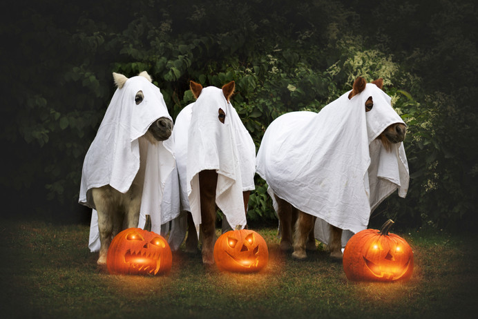 Halloween39.jpg