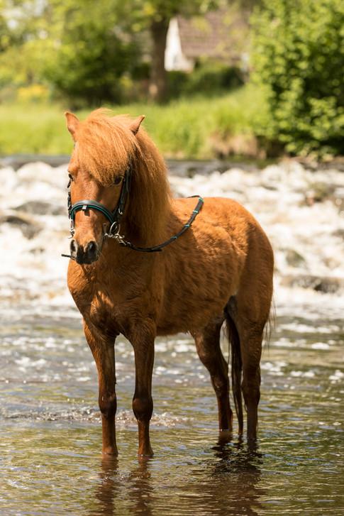 Pony157.jpg
