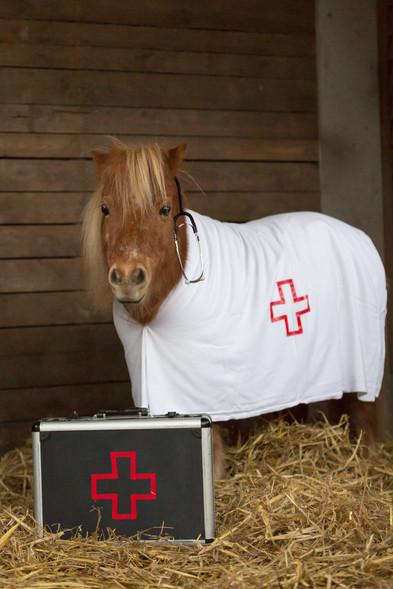 Dr.Pony015.jpg