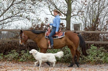 HorseDogTrail66.jpg