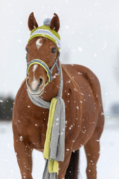 Schnee003.jpg