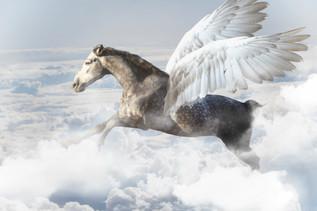Pegasus6.jpg