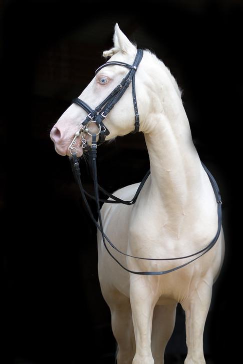 Ponyhengst25.jpg