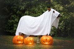 Halloween34.jpg