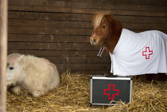 Dr.Pony032.jpg