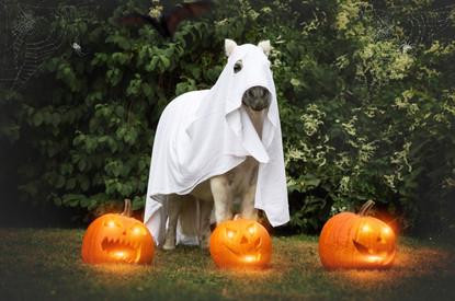 Halloween46.jpg