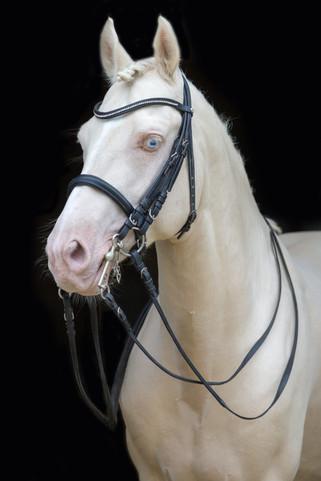 Ponyhengst15.jpg
