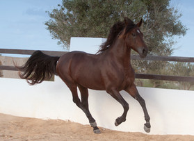 Berber62.jpg