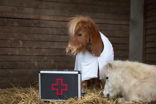 Dr.Pony028.jpg