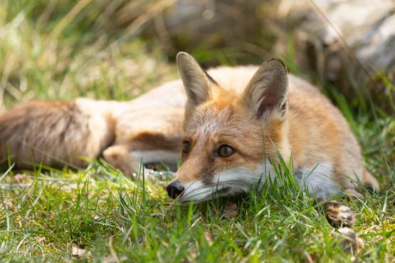 Foxy009.jpg