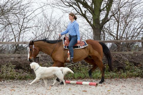 HorseDogTrail88.jpg
