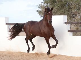 Berber64.jpg