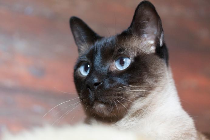Katze120.jpg