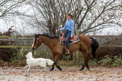 HorseDogTrail82.jpg