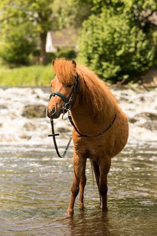 Pony154.jpg