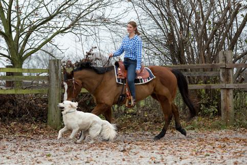 HorseDogTrail75.jpg