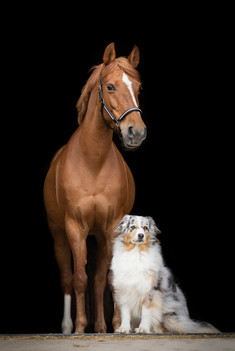 Hund_Pferd003.jpg
