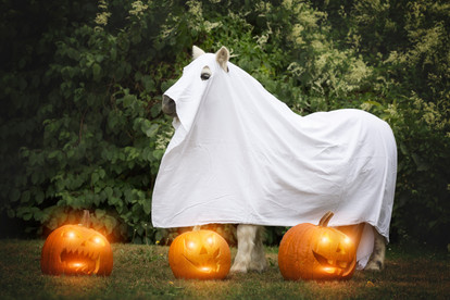 Halloween40.jpg