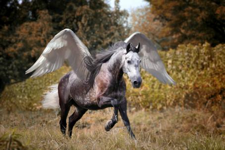 Pegasus7.jpg