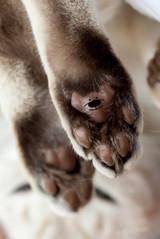 Katze112.jpg