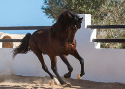 Berber68.jpg