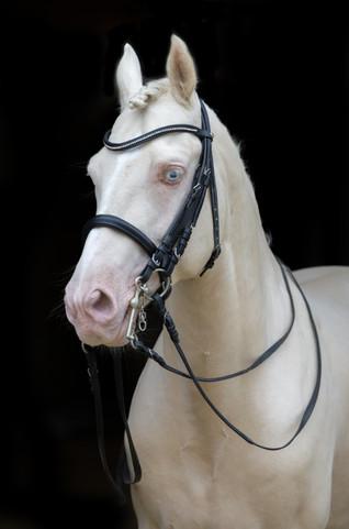 Ponyhengst21.jpg
