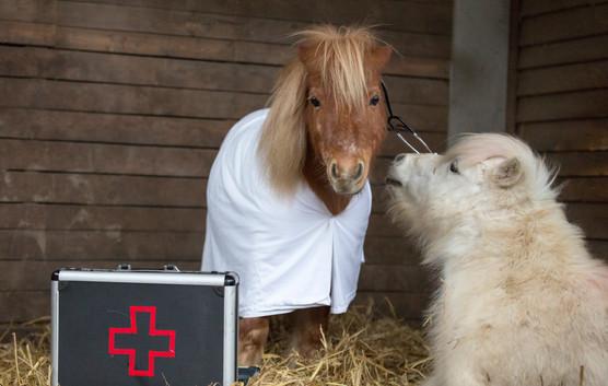 Dr.Pony022.jpg