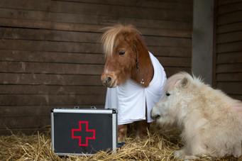 Dr.Pony026.jpg