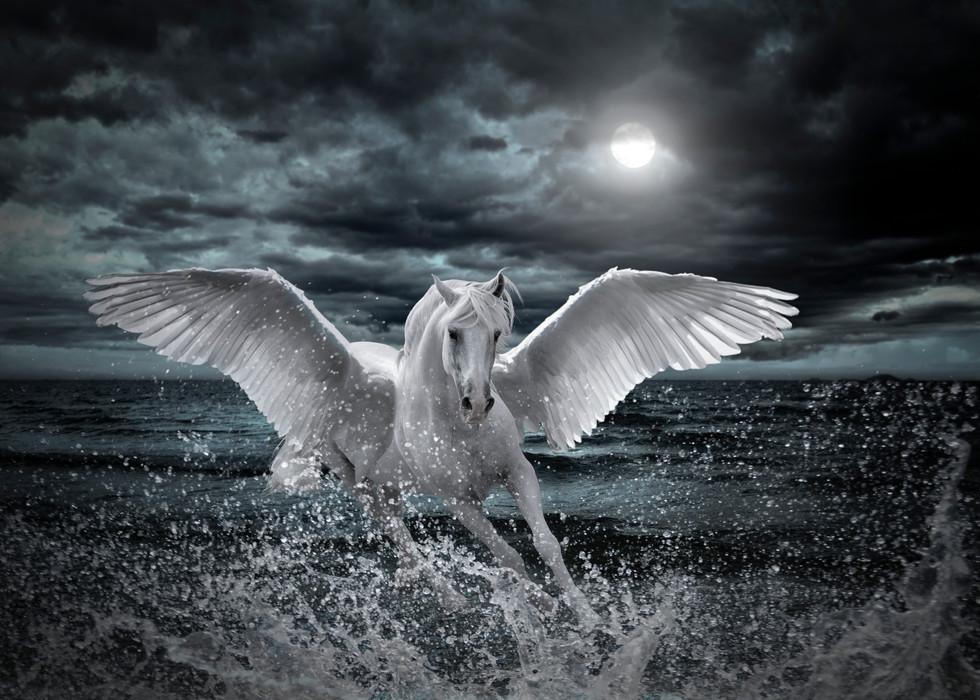 Pegasus8.jpg
