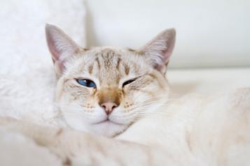 Katze59.jpg