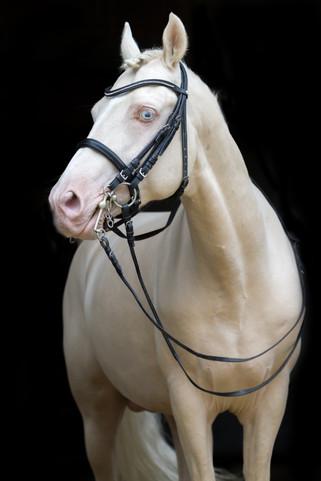 Ponyhengst22.jpg