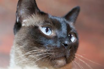 Katze119.jpg