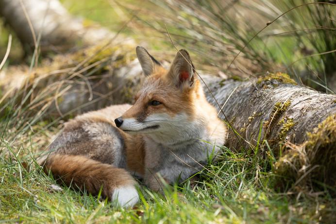 Foxy028.jpg