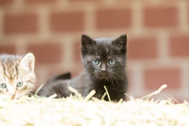 Katze104.jpg