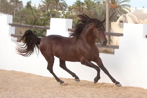 Berber65.jpg