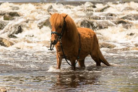Pony151.jpg