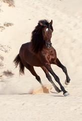 Berber92.jpg