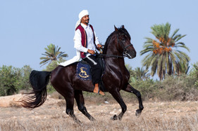 Berber98.jpg