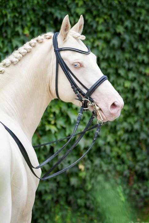 Ponyhengst11.jpg