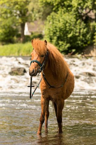 Pony155.jpg