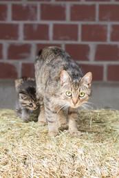 Katze96.jpg