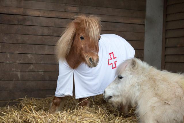 Dr.Pony020.jpg
