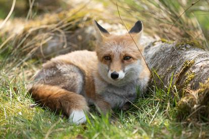 Foxy022.jpg