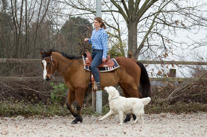 HorseDogTrail83.jpg