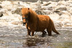 Pony149.jpg