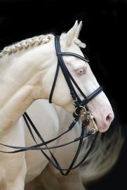 Ponyhengst18.jpg